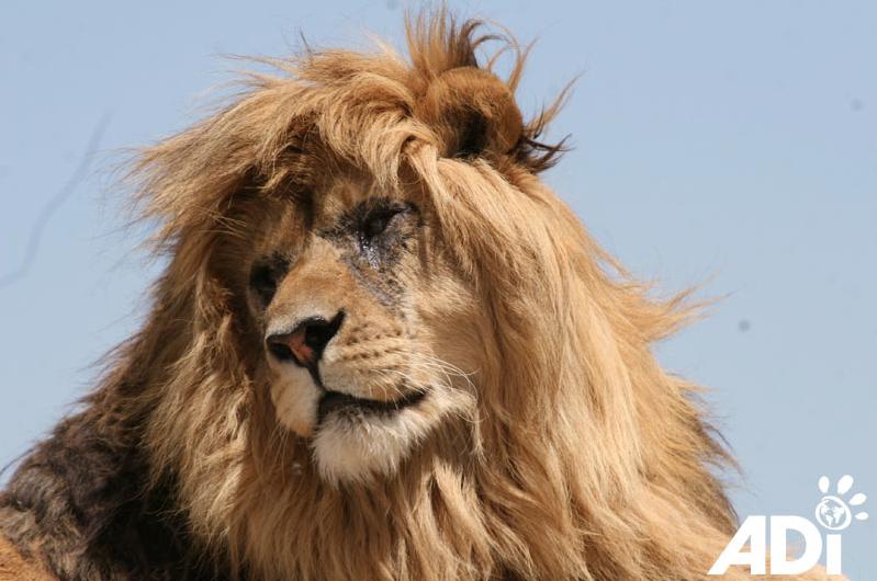 LionArkImage